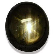 20.41 ct 12 Golden Ray Black Star Sapphire, Thailand