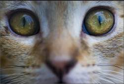 Natural cat's eye